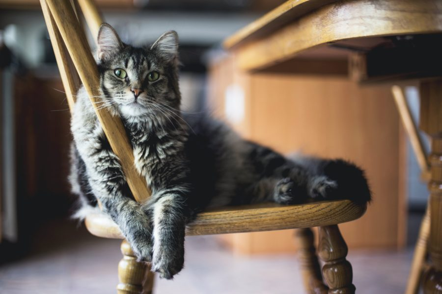 Cat sitting on chair in home